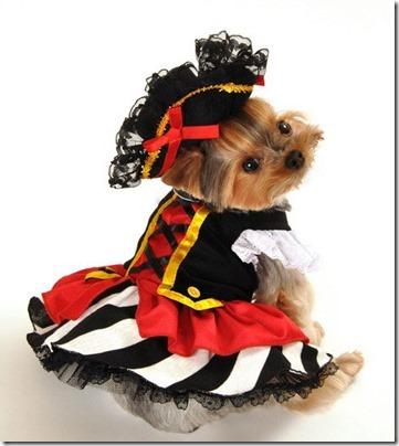 disfraces divertidos para perros  (5)