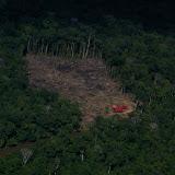 Déforestation entre Saül et Maripasoula (Guyane), 2 décembre 2011. Photo : J.-M. Gayman