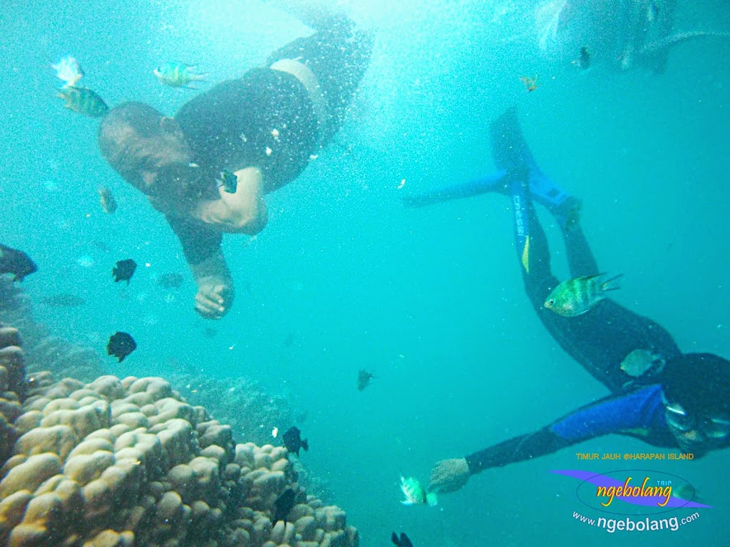 pulau harapan timur jauh 29-30 nov 2014 caklung 33