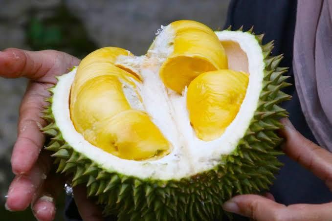 berbagai macam buah durian yang begitu manis dan nikmat di tempat wisata de' durian Park Wonosalam