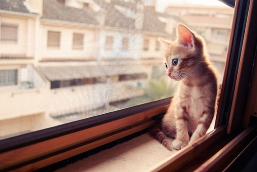 cat-waiting-window-6