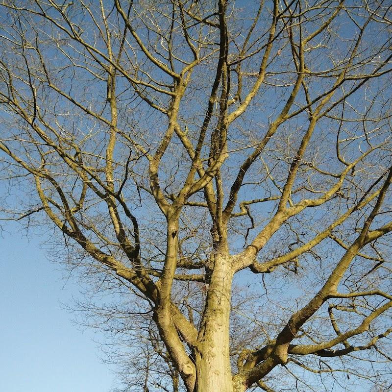 Stowe_Trees_13.JPG