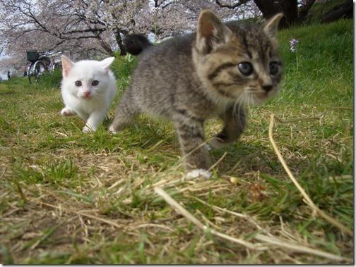 22 fotos de gats (6)
