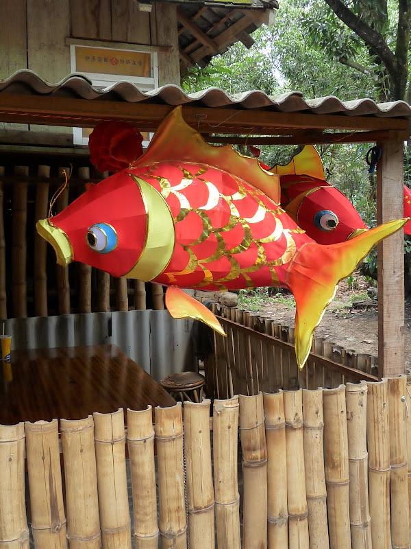 Chine .Yunnan . Lac au sud de Kunming ,Jinghong xishangbanna,+ grand jardin botanique, de Chine +j - Picture1%2B717.jpg