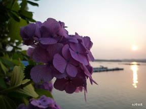 石山荘前にアジサイが見事に咲いてました。