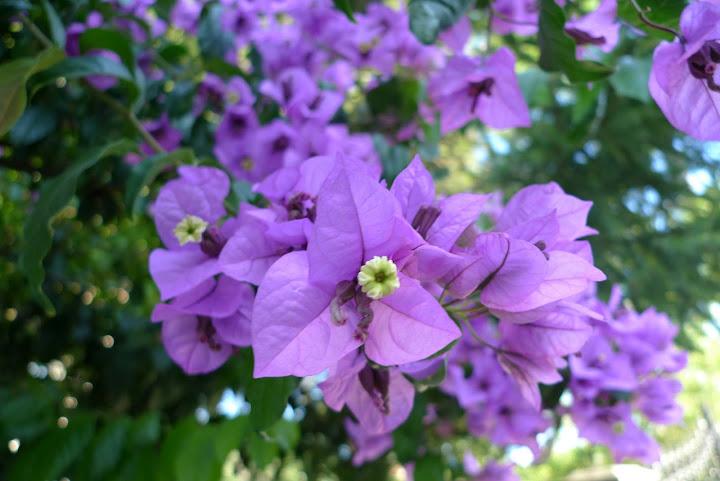 kwiatek nr 8