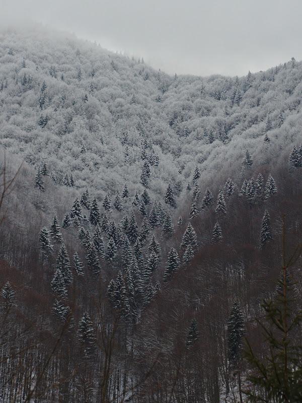 Padurea la plecare, imbracate in straie noi de iarna.