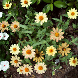 Gardening 2009 - 101_5086.JPG