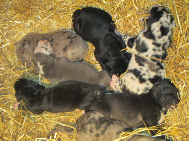 Saffy's babies @ 2 weeks