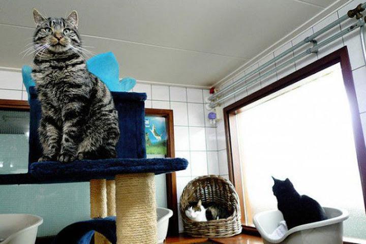 De Poezenboot, o barco dos gatos