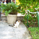 Key West Vacation - 116_5406.JPG