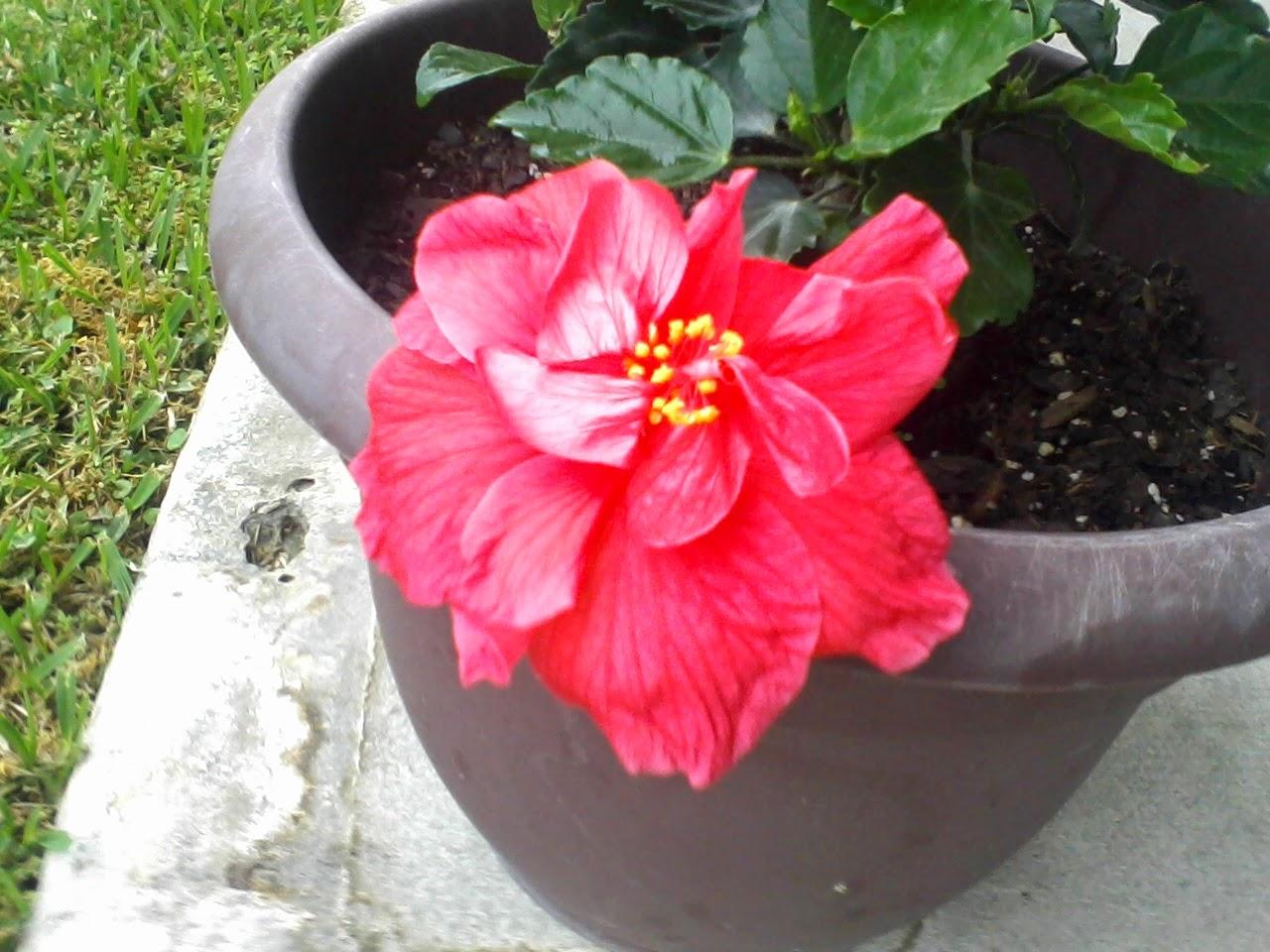 Gardening 2014 - 0406095003.jpg