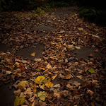 Fall in MI, 09 (82 of 122)dng.jpg