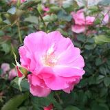 Gardening 2012 - IMG_2724.JPG