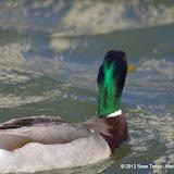 04-27-12 Rockwall Harbor - IMGP0658.JPG