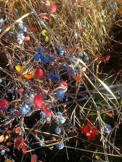 berries-lake