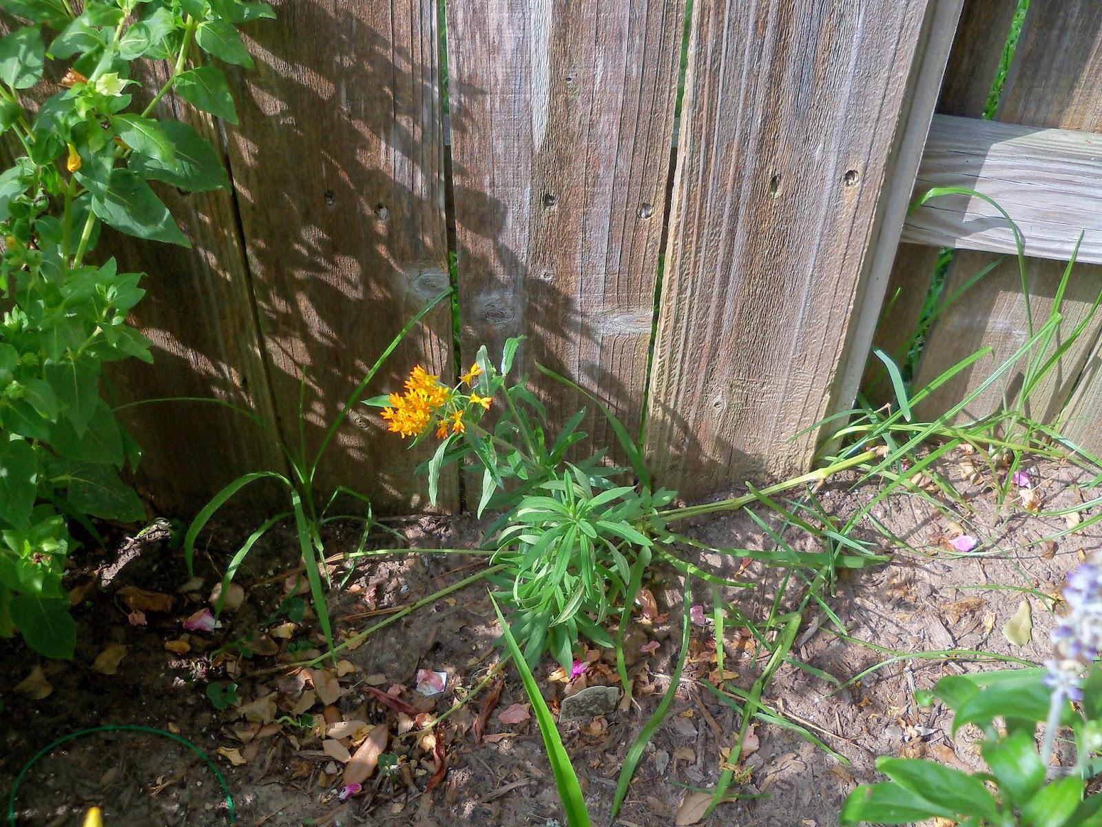 Gardening 2014 - 116_3241.JPG