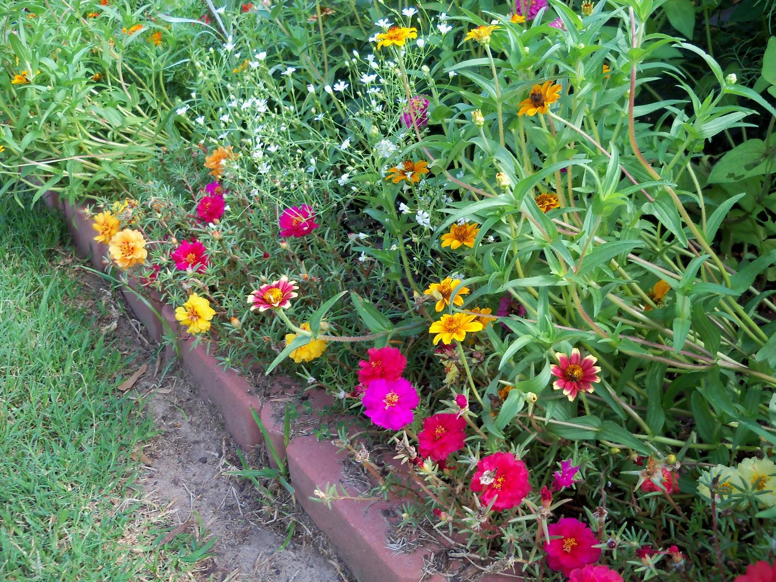 Gardening 2010, Part Three - 101_3696.JPG