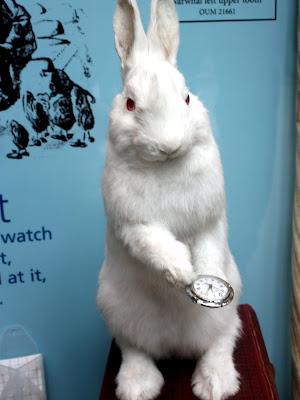Taxidermy rabbit in Oxford