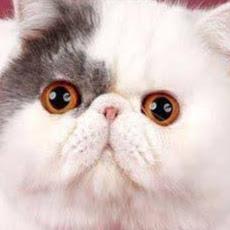 user Sara El Qutob apkdeer profile image