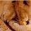 Kanu Lion's profile photo