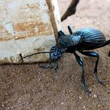 Critters - Big%2Bbug.JPG