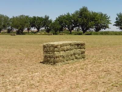 Paca de alfalfa alpaca San Juan de Mozarrifar