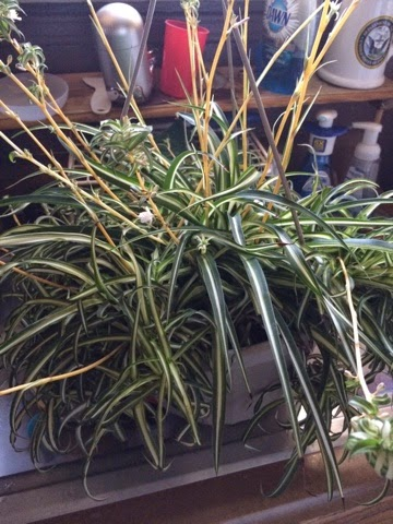 Air Plants Baby S Room