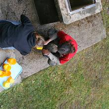 Jesenovanje, Črni dol 2007 - IMG_9701.jpg