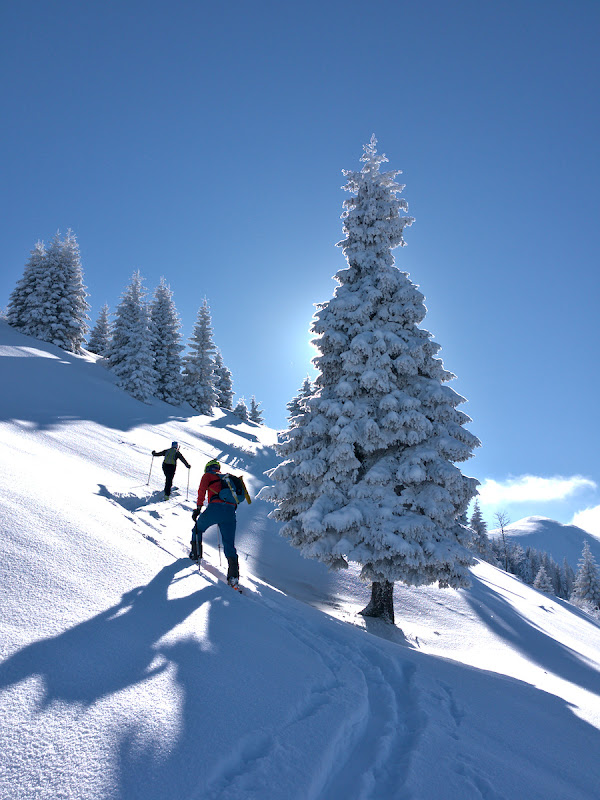 Copacii din poveste incarcati cu zapada din poveste.