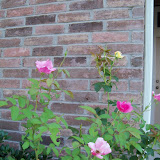 Gardening 2010, Part Three - 101_3991.JPG