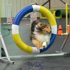 WDC Nov 28-29 2015 Agility Trials