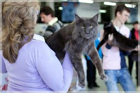 cats-show-24-03-2012-fife-spb-www.coonplanet.ru-090.jpg