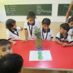 Introduction to Pinapple (Playgroup) 11-9-2014