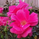 Gardening 2012 - 115_1254.JPG