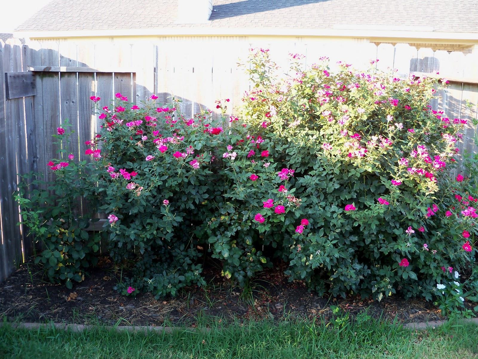 Gardening 2011 - 100_9224.JPG