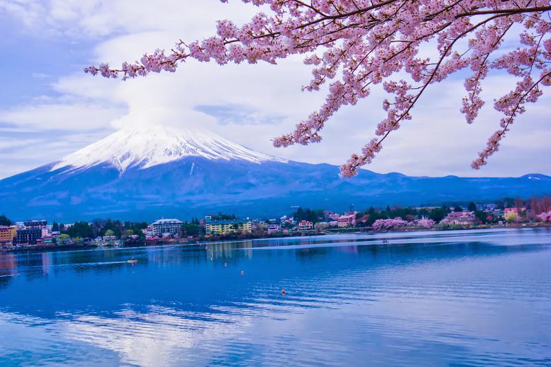 河口湖 産屋ヶ崎 桜 写真10