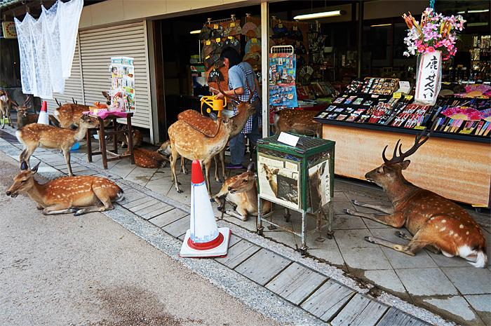 Nara26.jpg