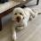 Peter Jeon's profile photo