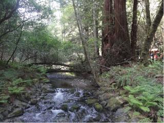 En liten elv som renner gjennom en grønn skog. En tykk strestamme ved elvebredden.
