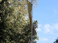 Felvonták a zászlót.jpg