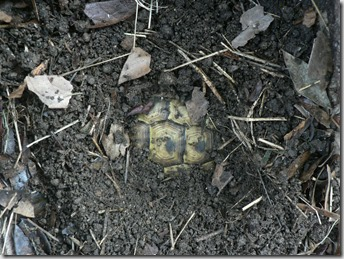 Letargo tartarughe - 1