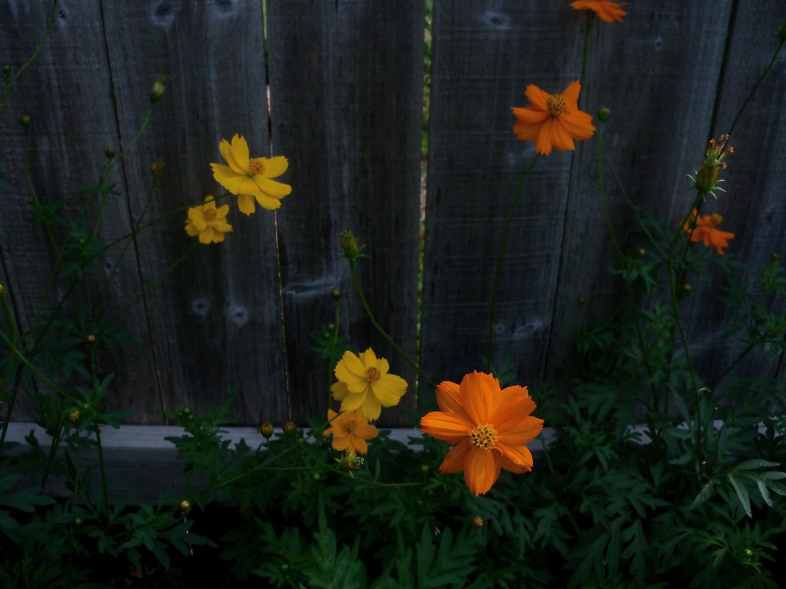 Gardening 2011 - 100_8702.JPG