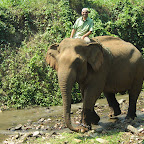 Elephant Special Tours - Training Trip