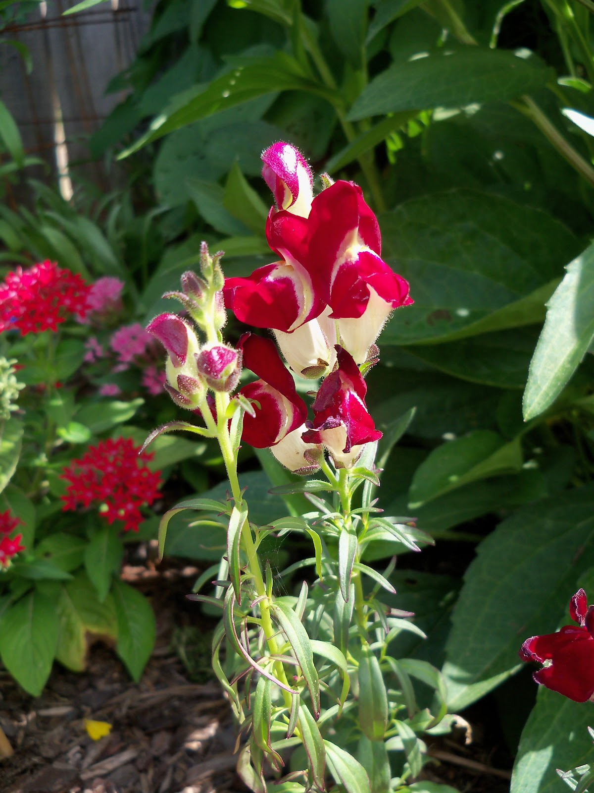 Gardening 2010, Part Three - 101_3896.JPG