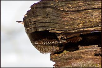 Photo: Mimikry oder perfekte Tarnung?  Naturfotografie: http://goo.gl/ITvFrA