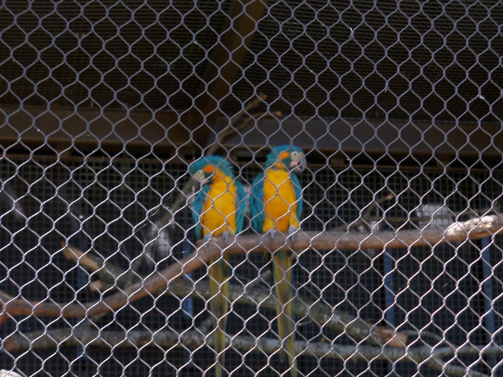Houston Zoo - 116_8469.JPG