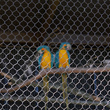 Houston Zoo - 116_8469.JPG