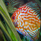 Downtown Aquarium - 116_3912.JPG