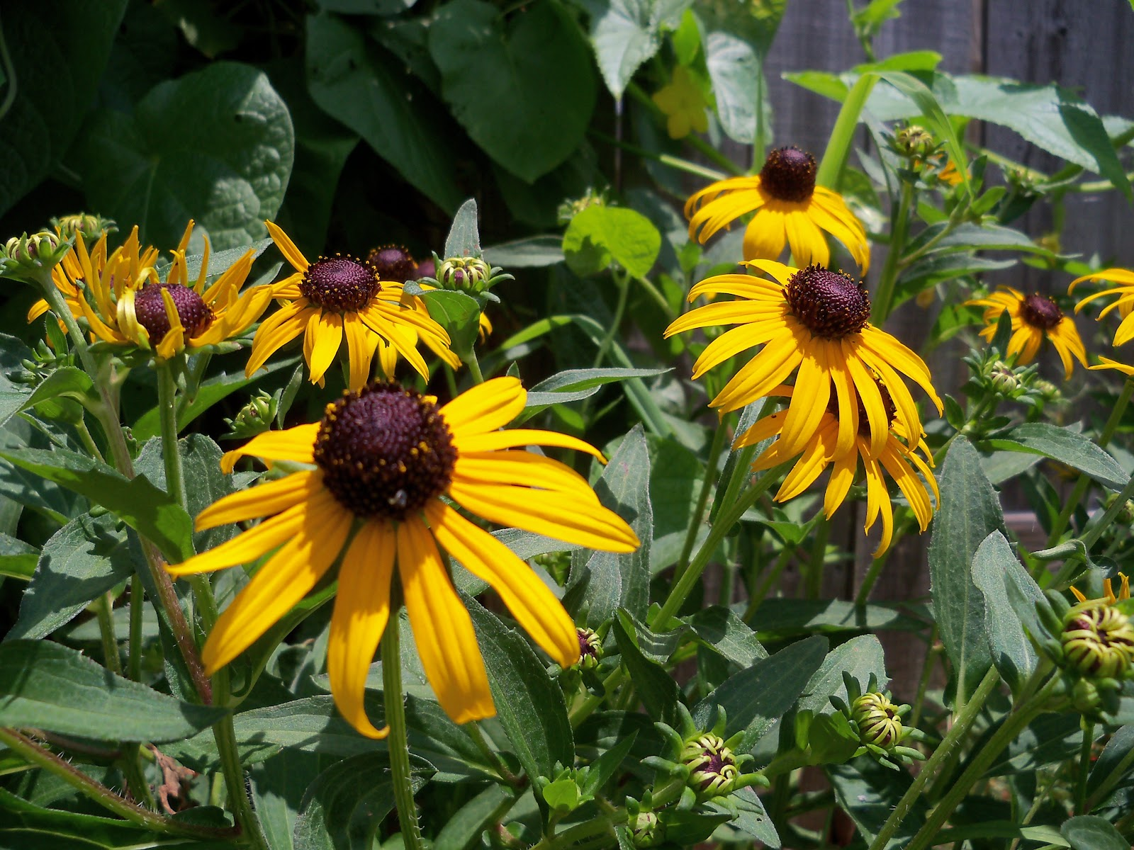 Gardening 2010, Part Three - 101_4854.JPG